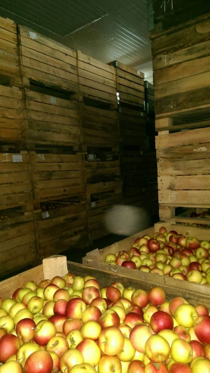 Фруктохранилище с яблоками